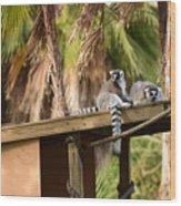 Lemur Couple Wood Print