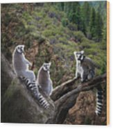 Lemur Family Wood Print