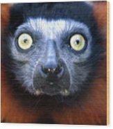 Lemur Glare Wood Print