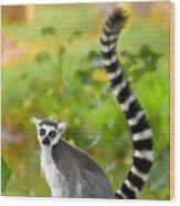 Lemur Lemur Wood Print