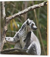 Lemur Love Wood Print