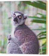 Lemur's Gaze Wood Print