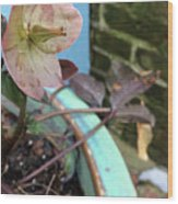 Lenten Rose After An April Shower Wood Print