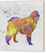 Leonberger In Watercolor Wood Print