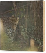 Leopard Comes Out Of The Bush Wood Print