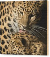 Leopard Cub Love Wood Print
