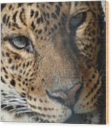 Leopard Face Wood Print