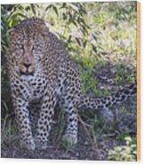Leopard Front Wood Print