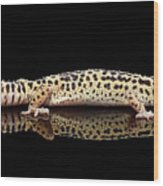 Leopard Gecko Eublepharis Macularius Isolated On Black Background Wood Print