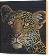 Leopard In The Dark Wood Print by Lorraine Foster