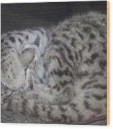 Leopard Kitten Wood Print