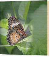 Leopard Lacewing Wood Print