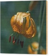 Leopard Lilly Wood Print