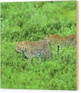 Leopard On The Move Wood Print