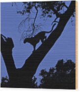Leopard On The Prowl Wood Print