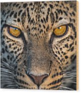 Leopard Panthera Pardus, Ndutu Wood Print