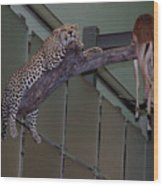Leopard Tree Cat Preying Wood Print