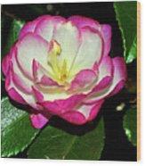 Leslie Ann - Sasanqua Camellia 006 Wood Print