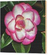 Leslie Ann - Sasanqua Camellia 007 Wood Print