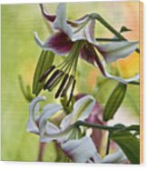 Leslie Woodriffe Lily Wood Print