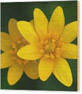 Lesser Celandine Wood Print