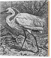 Lesser Egret Wood Print