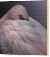 Lesser Flamingo Resting Wood Print