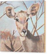 Lesser Kudu Wood Print