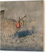 Lesser Prairie Chicken Wood Print
