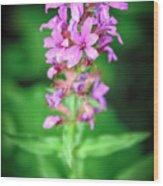 Lesser Purple Fringed Orchid Wood Print