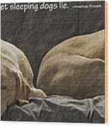 Let Sleeping Dogs Lie Wood Print by Gwyn Newcombe