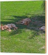 Let Sleeping Dogs Lie Wood Print