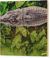 Let Sleeping Gators Lie Wood Print
