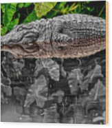 Let Sleeping Gators Lie - Mod Wood Print