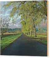 Let's Drive Through The Vineyard Wood Print