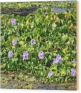 Lettuce Lake Flowers Wood Print