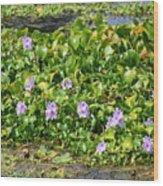 Lettuce Lake Flowers Wood Print