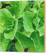 Lettuces Wood Print