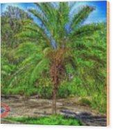 Leu Gardens Palm Wood Print