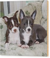 Lexi And Gracie Wood Print