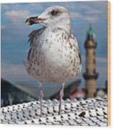 Liberty Of An Pacific Gull Wood Print