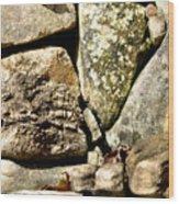 Lichen And Moss Wood Print