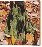 Lichen Castle In Autumn Leaves Wood Print