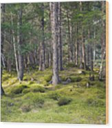 Lichen Covered Mountain Floor Wood Print