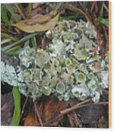 Lichen On Dead Branch Outer Banks North Carolina Usa Wood Print