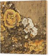 Lichen On The Piran Walls Wood Print
