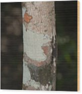 Lichen On The Trees At The Coba Ruins  Wood Print