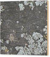 Lichen On Wood Wood Print