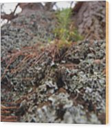 Lichen Tower Wood Print