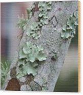 Lichens 2 Wood Print